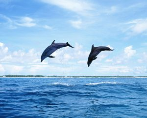 Android Dolphin Browser HD